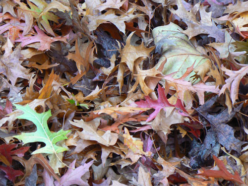 feuilles rouges.jpg