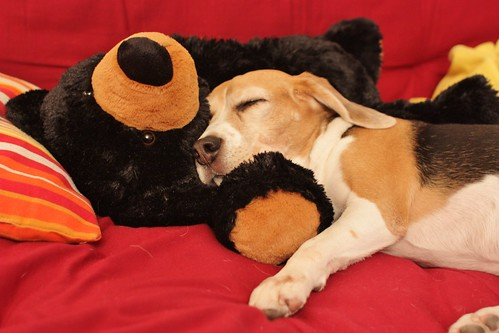 Sweet Dreams with New Bear