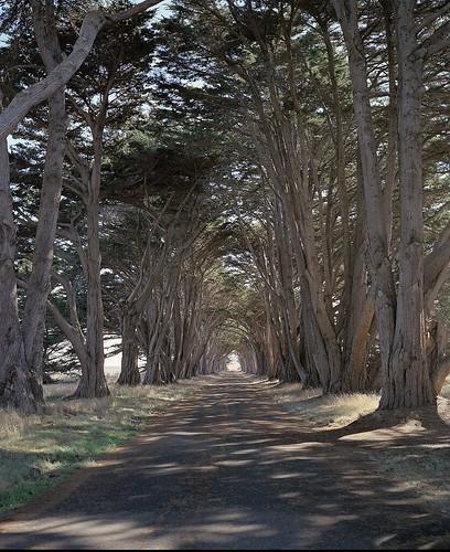 [フリー画像素材] 道路・道, 樹木, 並木道 ID:201211222000