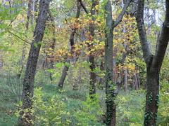 colori delle quercie