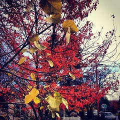 Remnants of autumn. #day95