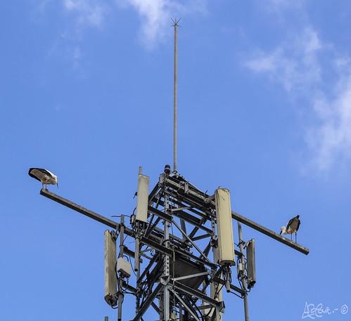 328/365+1  Para rayos y para cigüeñas (Torre Telefónica) by Bakalito (Antonio Benítez Paz)
