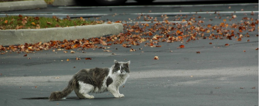 A stray cat on a parking lot.