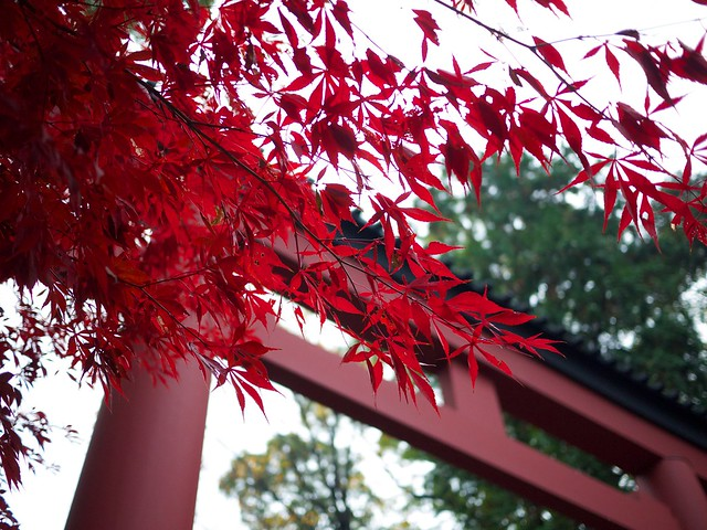 red takekazu, on Flickr
