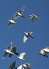 animal migration, animal, wing, flock, gannet, bird migration, bird, flight, seabird,