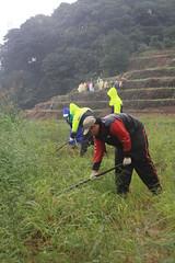 石門嵩山社區生態工作假期