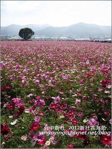 台中新社_2012新社花海節20121125_R0010593