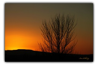 Sunset.Silhouette Tree.