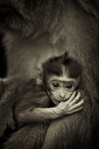 Monkey Forest VI by *rainbowgirl*