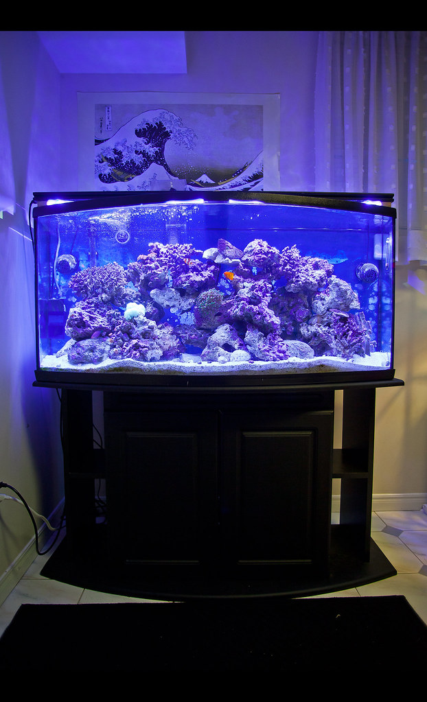 75 Gallon Bow Front Aquarium http://www.housesplans.us/designs/75-gallon-bow-front-aquarium