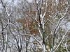 e i colori caldi dietro la neve