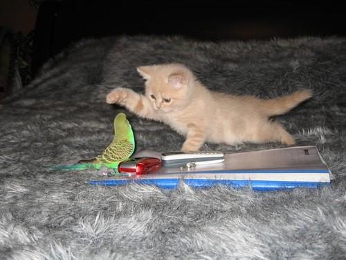 kittenparrot 4