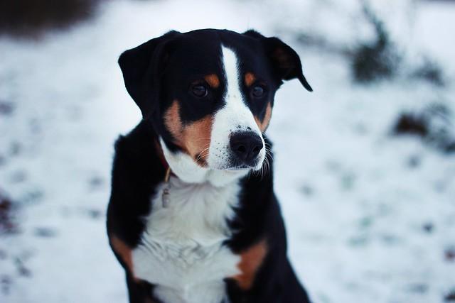 Hundi ♥