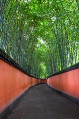 Bamboo Path 竹林道