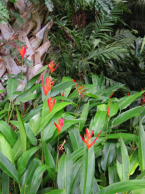 Heliconia Garden