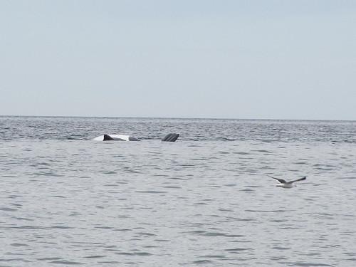 Puerto Madryn: un beau ventre de baleine