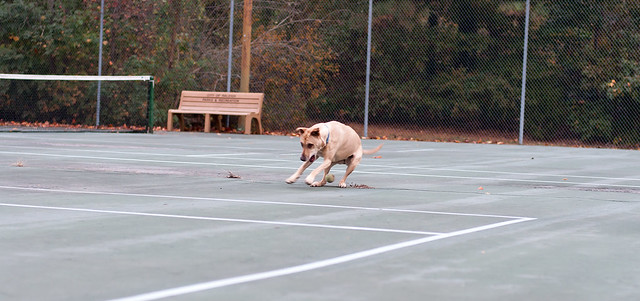 Shelby-Brentwood-Tennis-Courts