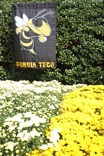 Chrysanthemums in Georgia Tech colors