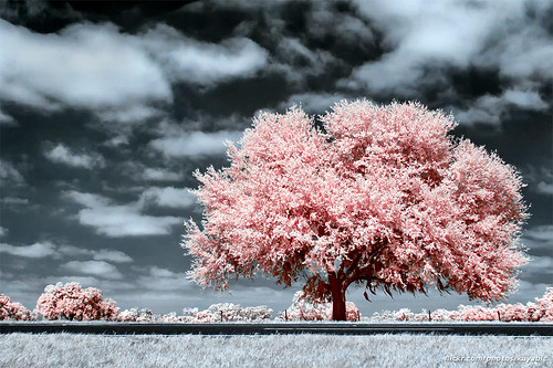road pink sky tree nature clouds 35mm landscape ir oak nikon highway afternoon florida filter infrared d40 ir720