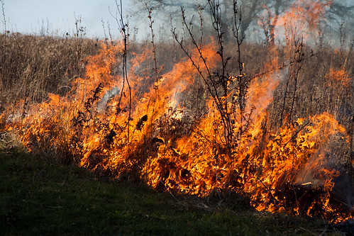 Burning biocore prairie - 20121108 - 24