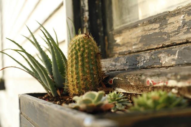 cactus window planter box