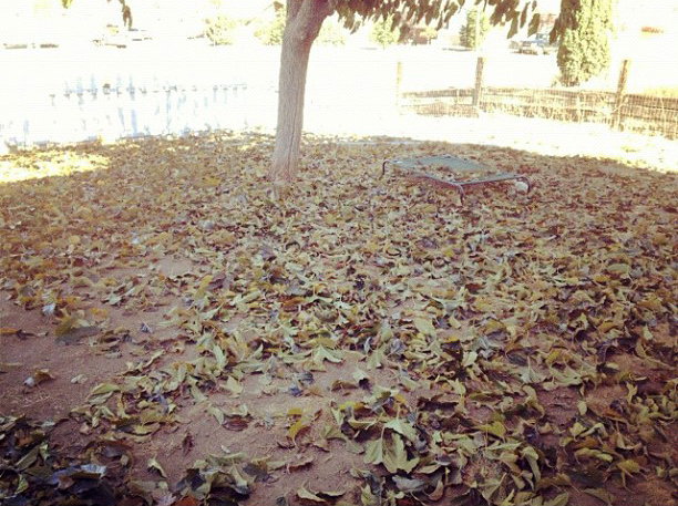 Autumn Leaves - November 2012
