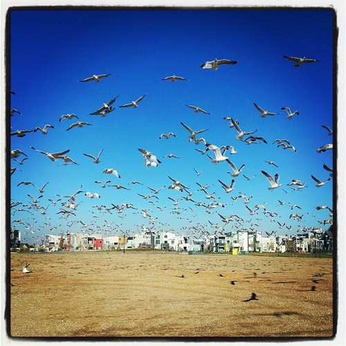And then the hundreds of gulls decided to all fly over US and it was the  most terrifying thing ever.