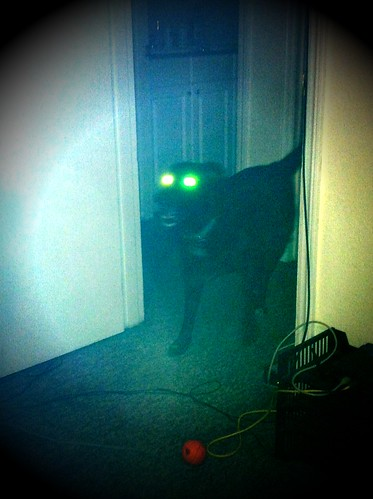 Maggie is a #ghostdog.
