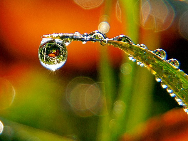 Dew Drop Refraction - Light Stalking