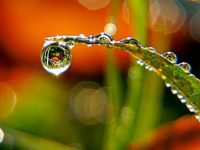 dew drop refraction light stalking