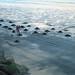 Small photo of Raking up the Sea Coal
