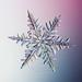 Eveleigh-snow12-5471 by Pam Eveleigh