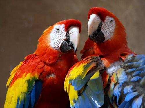 Esperanza para un ave en peligro de extinción - Loro Libre -