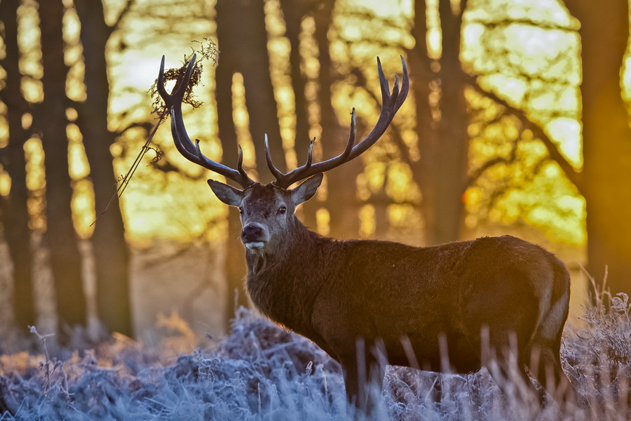 A Cold and Frosty Winters morning at Richmond Park, London