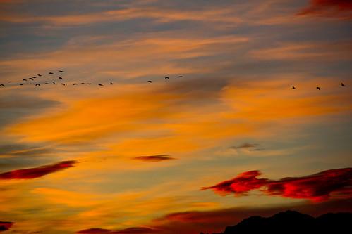 sunset birds clouds canon colorado