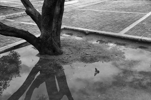 Bird Fly - Minimalism in Street Photography