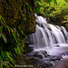 Purakaunui Falls, New Zealand by Kenny Muir