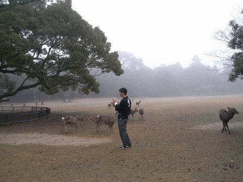 鹿寄せ@奈良公園(飛火野)-03