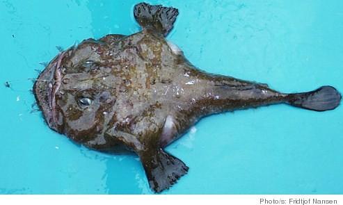 sixfour_monkfish2