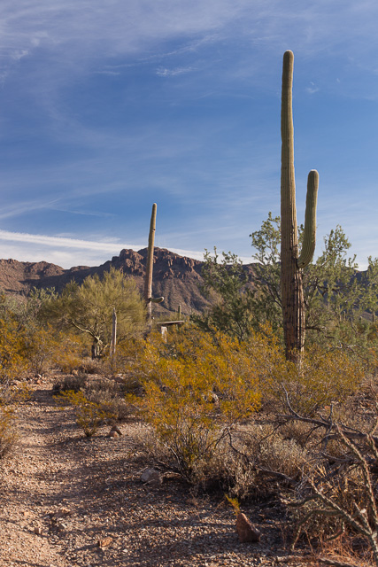 Trail in the Sonoran