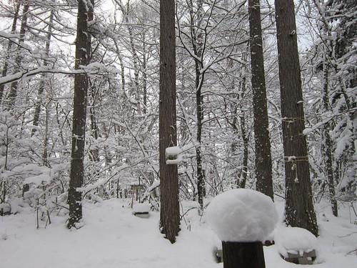 庭の積雪27cm 2012年12月10日9:12 by Poran111