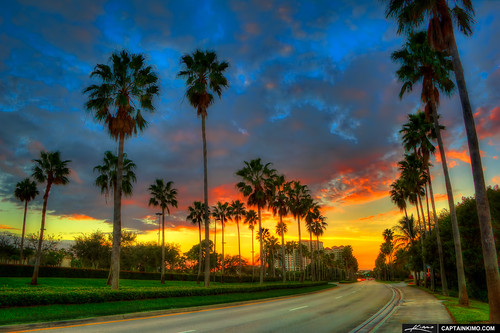 Palm-Trees-Along-Gardens-Parkway-Street-in-Palm-Beach-Gardens