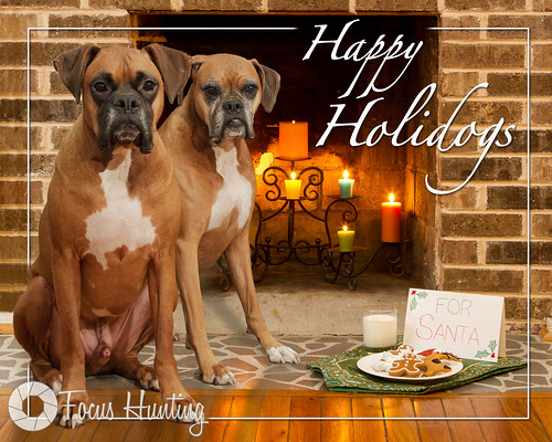 Happy Holidogs 2011
