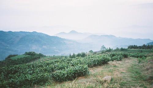 Jardin du Bai Hao Yin Zhen