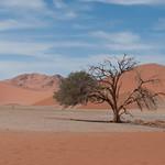Árbol en el desierto