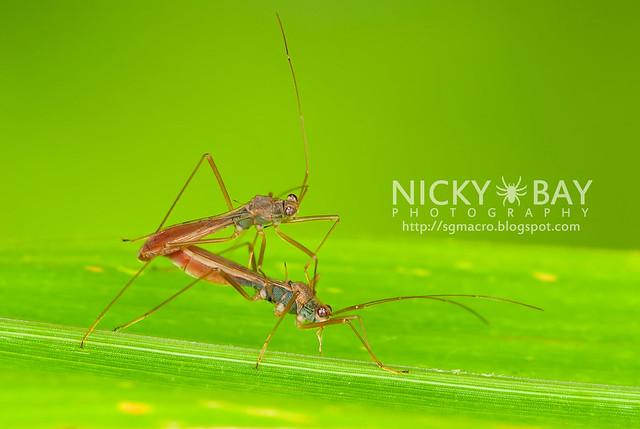Broad-Headed Bugs? (Alydidae) - DSC_7003