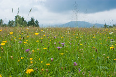 The-Meadow