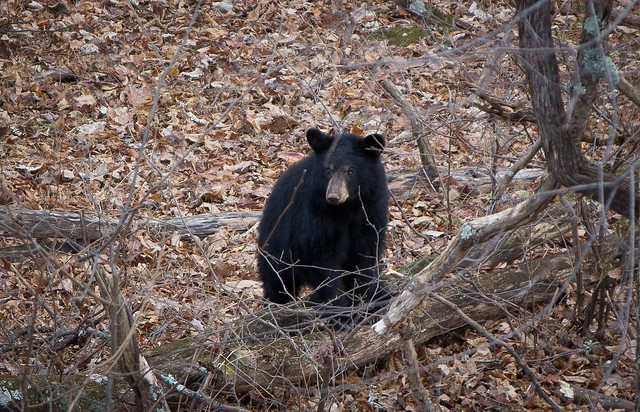 bear cub chillin