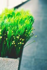 [フリー画像素材] 花・植物 ID:201301030600