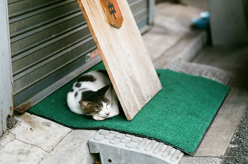 足立区某所の猫
